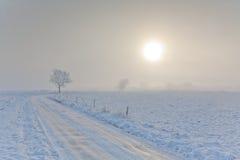 Het landschap van de winter met verpakte bomensneeuw en weg Stock Afbeeldingen