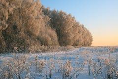 Het landschap van de winter met zonsondergangverlichting Stock Foto