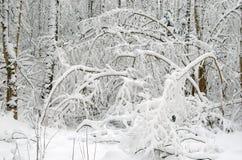 Het landschap van de winter na sneeuwonweer Stock Foto's