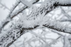 Het landschap van de winter in Rusland Stock Fotografie