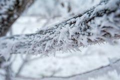 Het landschap van de winter in Rusland Stock Foto