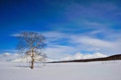 Het landschap van de winter in Rusland Stock Afbeelding