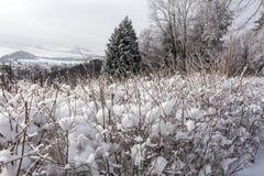 Het landschap van de winter Sneeuw de wintergebied en bevroren de winterinstallaties bij de zonsondergang, de natuurlijke scène v Royalty-vrije Stock Foto's