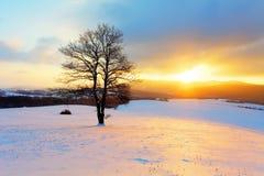 Het landschap van de winter in sneeuwaard met zon en boom Stock Fotografie