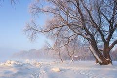 Het landschap van de winter Sneeuwdieboom door de rijpwinter wordt behandeld in ochtend stock fotografie