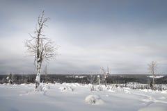 Het landschap van de winter Sneeuwgebied en bevroren bomen stock fotografie