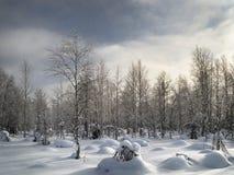 Het landschap van de winter Sneeuwgebied en bevroren bomen stock afbeelding