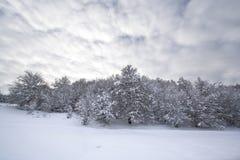 Het landschap van de Winter van Kerstmis Stock Afbeelding