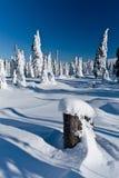 Het landschap van de winter van sneeuwspoken - madaras Harghita Stock Afbeeldingen