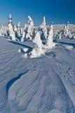 Het landschap van de winter van sneeuwspoken - madaras Harghita royalty-vrije stock fotografie