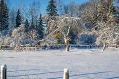Het landschap van de winter Zonnige dag De winterdaling De heldere kleuren Eenvoudig landschap De winter bos bosweg de winter fil Stock Fotografie