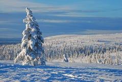 Het landschap van de winter in Zweden Stock Foto's