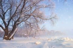 Het Landschap van de de winteraard Ijzige boom op sneeuwweide Sneeuwvlokken het Vallen sneeuwval stock afbeeldingen
