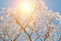 Het landschap van de de winteraard in ijzige duidelijke ochtend Verbazende sneeuwdiebomen op kust van ijsmeer door sneeuw in zonl royalty-vrije stock afbeeldingen