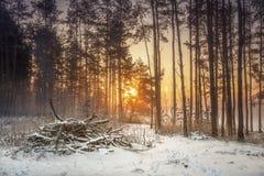 Het landschap van de de winteraard van sneeuwbos in warm zonlicht Levendig ijzig bos in ochtend stock afbeelding