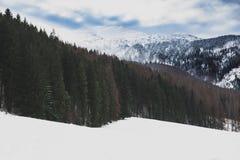 Het landschap van de de winterberg met pijnboombos Stock Foto's