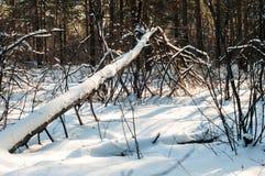 Het landschap van het de winterbos en zijn details zijn zo mooi royalty-vrije stock afbeeldingen