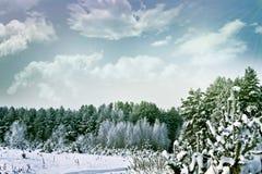 Het landschap van de winterforest winter Royalty-vrije Stock Foto's
