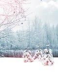 Het landschap van de winterforest winter Royalty-vrije Stock Foto