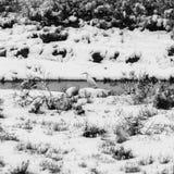 Het landschap van het de wintermoerasland royalty-vrije stock afbeeldingen