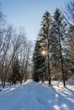 Het landschap van de de wintersneeuw met bos en zon stock foto