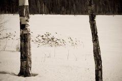 Het landschap van de de winterweide met riet en berken Stock Foto