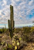 Het Landschap van de Woestijn van Arizona royalty-vrije stock afbeeldingen