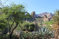 Het landschap van de woestijn in Arizona Royalty-vrije Stock Afbeeldingen