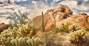 Het landschap van de woestijn met cactussen Saguaro en rots B royalty-vrije stock foto's