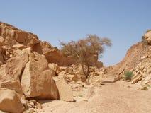 Het landschap van de woestijn van Sinai Schiereiland Royalty-vrije Stock Afbeelding