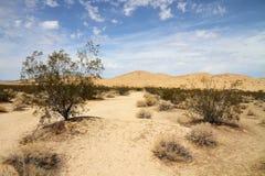 Het landschap van de woestijn (woestijn Mojave) Royalty-vrije Stock Afbeeldingen