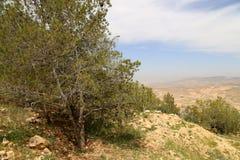 Het landschap van de woestijnberg (luchtmening), Jordanië, Midden-Oosten Stock Fotografie