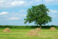 Het Landschap van de zomer stock afbeelding