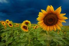 Het landschap van de zomer Royalty-vrije Stock Afbeeldingen