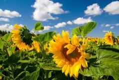 Het landschap van de zomer. Royalty-vrije Stock Afbeelding