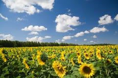 Het landschap van de zomer. Royalty-vrije Stock Afbeeldingen