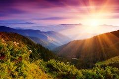 Het landschap van de zomer in bergen Stock Foto