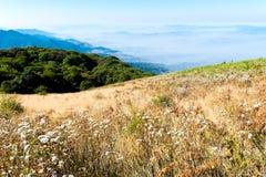 Het landschap van de zomer in de bergen Stock Afbeeldingen
