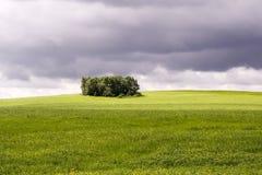 Het landschap van de zomer met bomen stock afbeeldingen