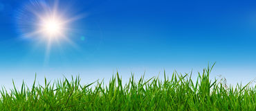 Het landschap van de zomer met gras en zonnige hemel Stock Fotografie