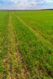 Het landschap van de zomer met groen gras Stock Foto