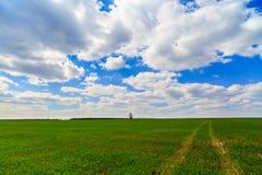 Het landschap van de zomer met groen gras Stock Afbeeldingen