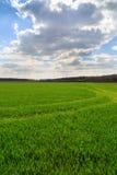 Het landschap van de zomer met groen gras Royalty-vrije Stock Foto's