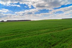 Het landschap van de zomer met groen gras Stock Afbeelding