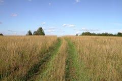 Het landschap van de zomer met groene gras, weg en wolken Royalty-vrije Stock Afbeelding