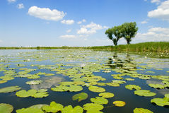 Het landschap van de zomer met rivier. Royalty-vrije Stock Afbeelding