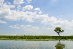 Het landschap van de zomer met rivier. Royalty-vrije Stock Foto