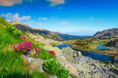 Het landschap van de de zomerberg met bloemen en alpiene meren, Transsylvanië, Roemenië stock foto's