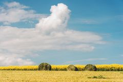Het landschap van het de zomerlandbouwbedrijf met hooibergen op het gebied royalty-vrije stock afbeelding