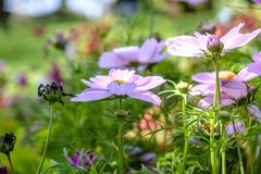 Het landschap van de zomerwildflowers Stock Foto's